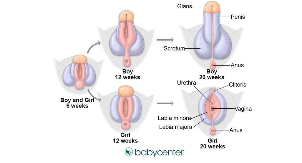 erecție slabă motiv ce să fac