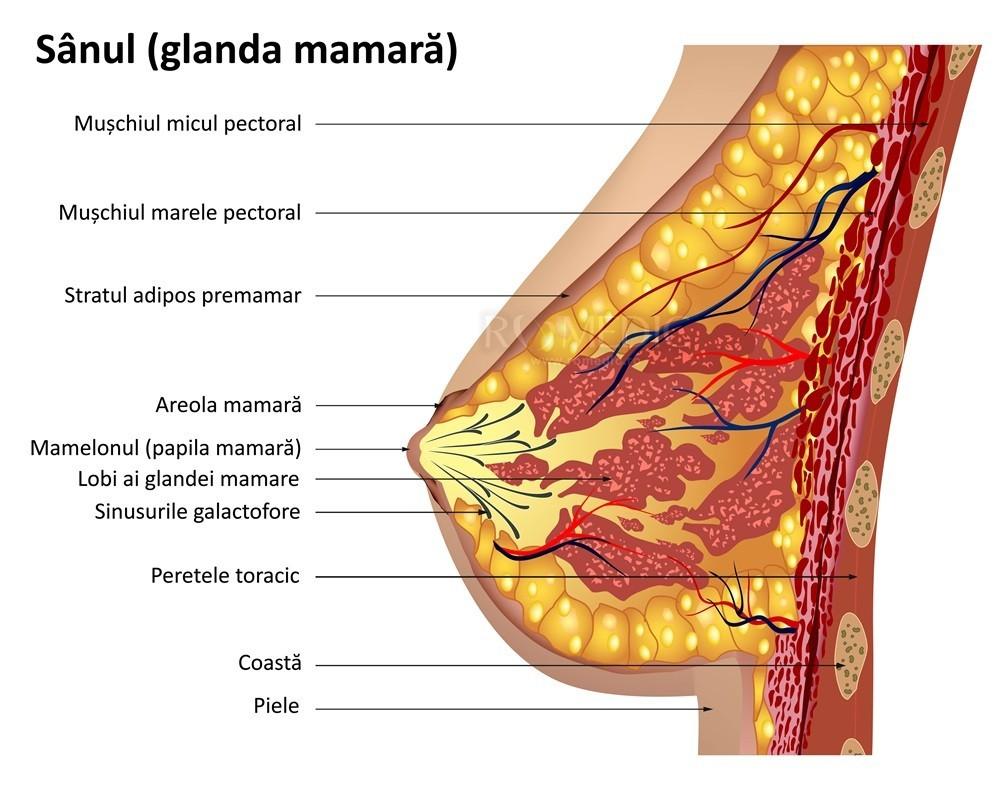 dimensiunea medie a penisului în repaus curbura corectă a penisului
