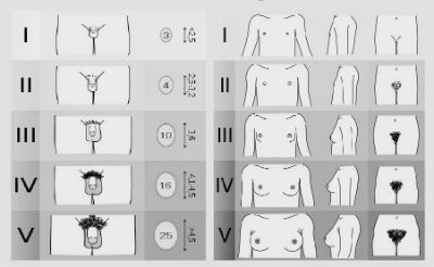 categorii de dimensiuni ale penisului