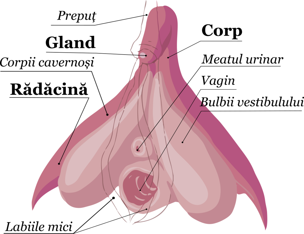 mașină de tratat erecție