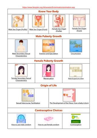 erecție periodică