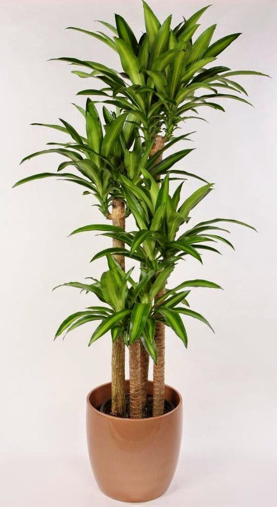 care plante cresc erecția