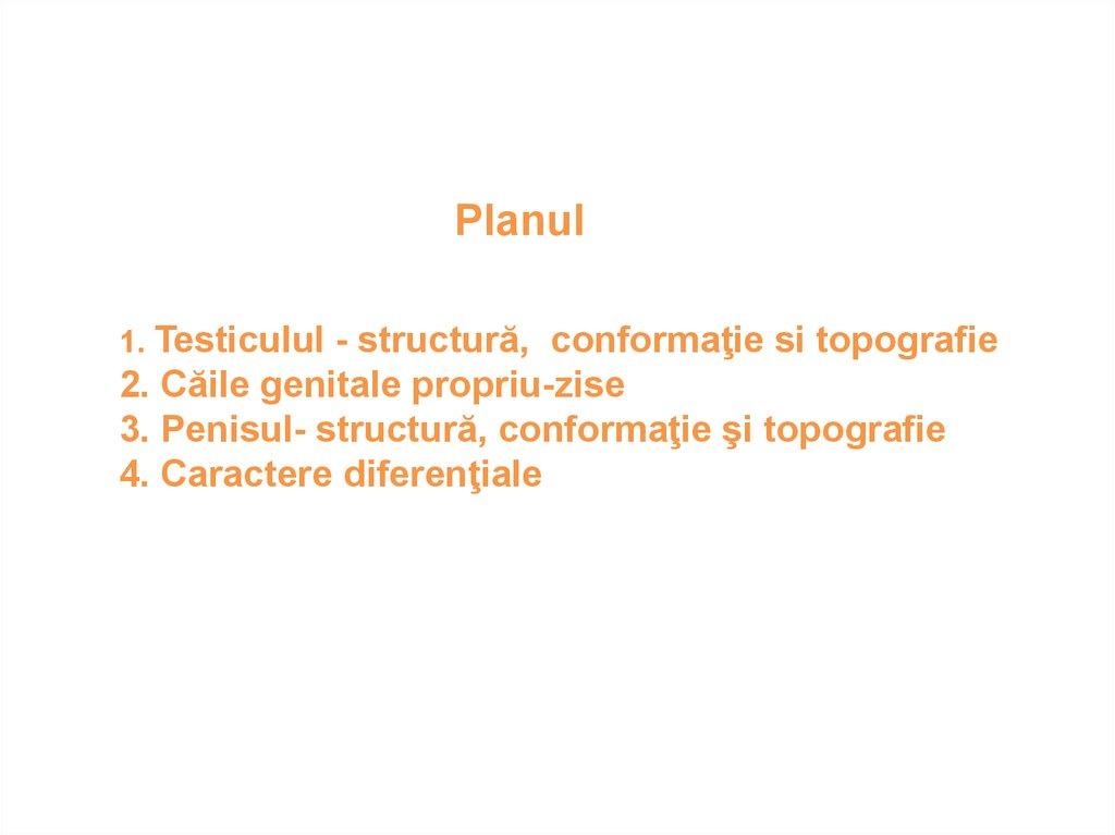 structura penisului și a testiculelor