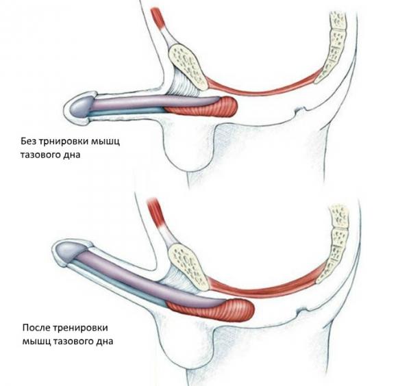 masaj de organe pentru a îmbunătăți erecția ajută la erecție la un moment dat