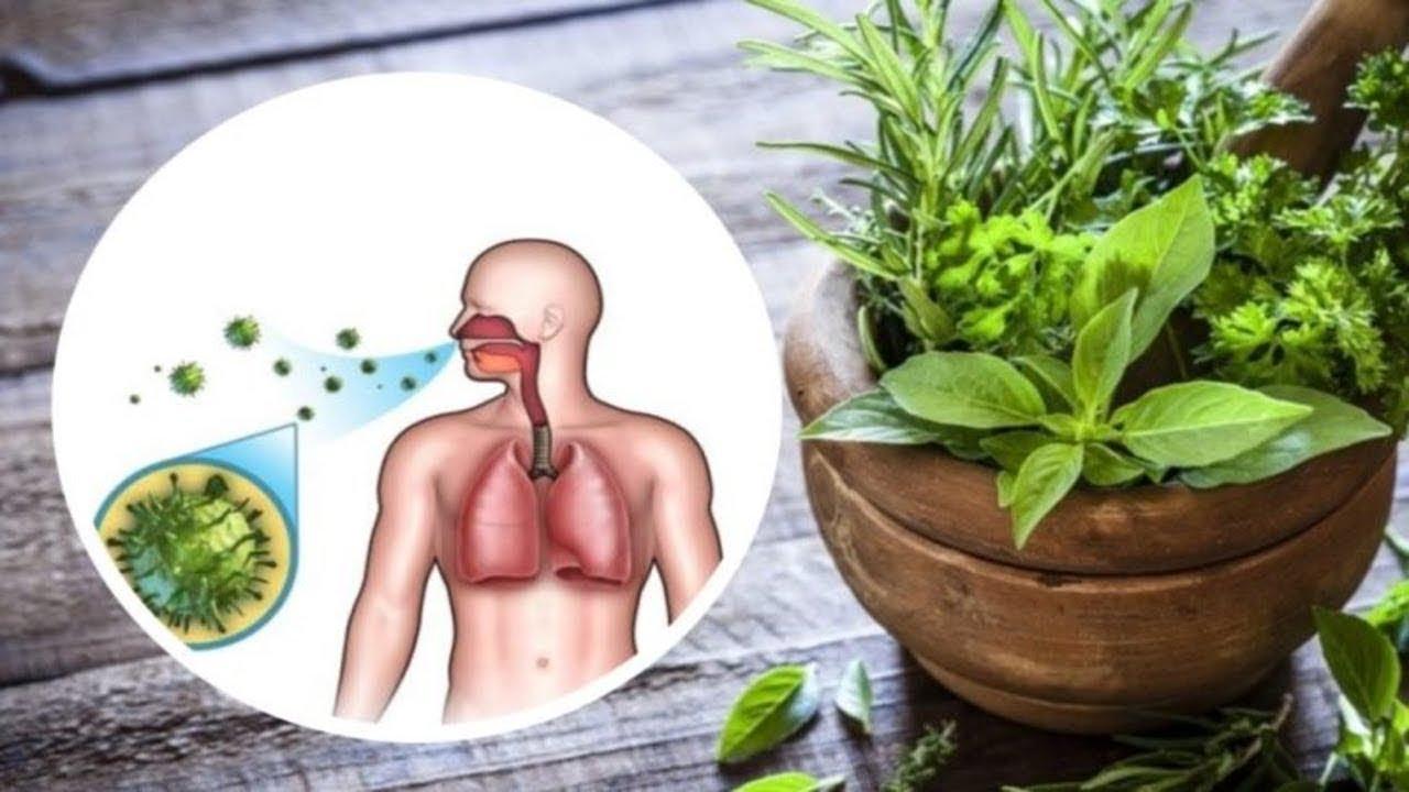 GentleManus - Capsule pentru Erecție pe Bază de Plante Naturale, 2 cps • Just Love