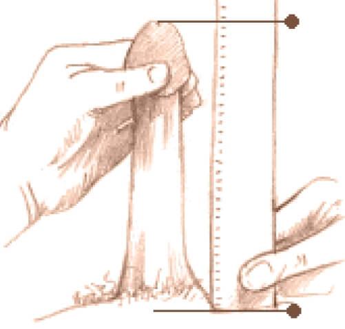 câți cm poate fi mărit penisul