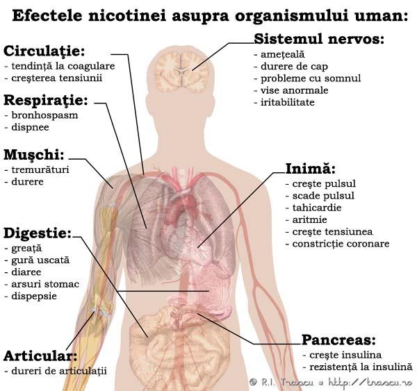 nicotină și erecție