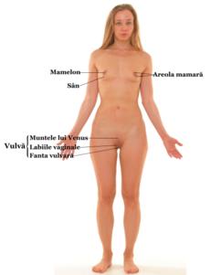 cum se realizează o erecție la femei)