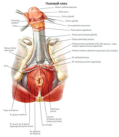 Cancer penian (de penis) - Tot ce trebuie să ştii | Cancer