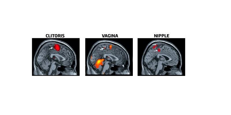 mărimea și tipurile de penisuri ce ar trebui să fie penisul unui bărbat