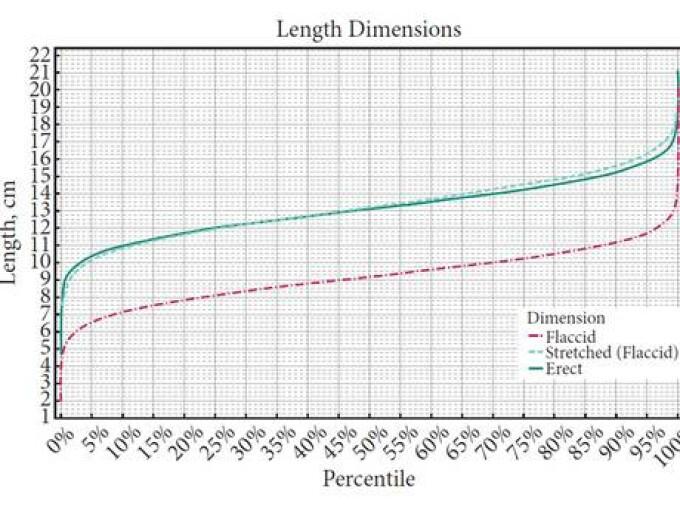 dimensiunea medie a penisului