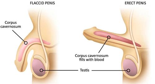 dimensiunea medie a penisului în rb semne de penis racite