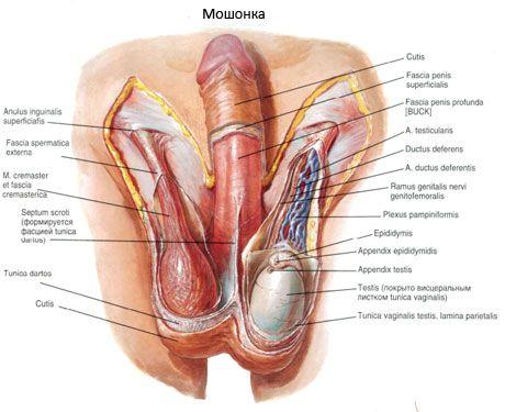 ridica penisuri mari ce medicamente pot spori o erecție