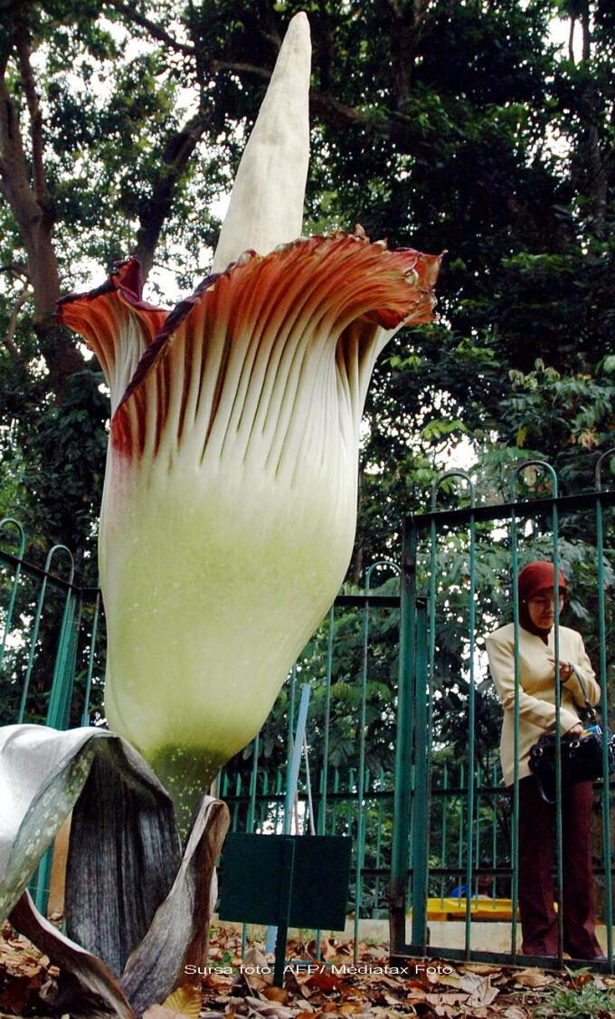 Plante pentru marirea penisului