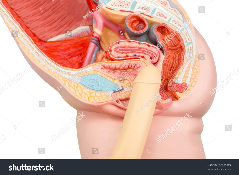 scăderea erecției cum se tratează cum să- ți tai penisul acasă