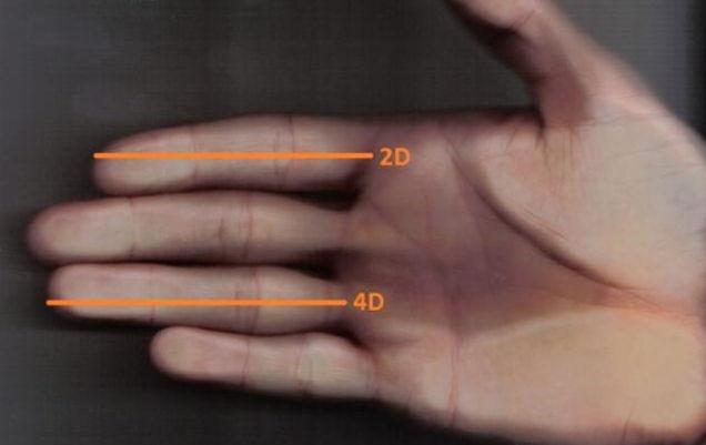 determinarea dimensiunii penisului