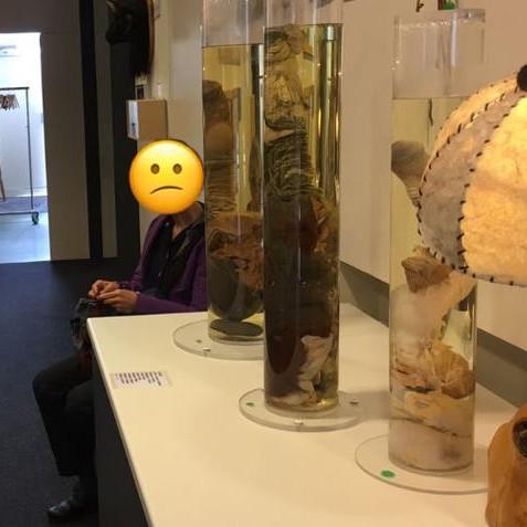 fata penisului