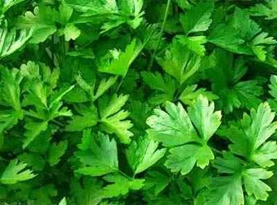 Ceaiurile cu efect de Viagra. Care sunt plantele care stimulează potenţa | go2dent.ro
