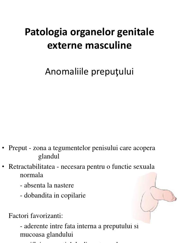 patologia penisului)