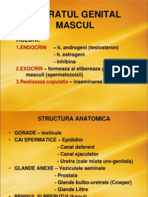 structura penisului și a testiculelor)