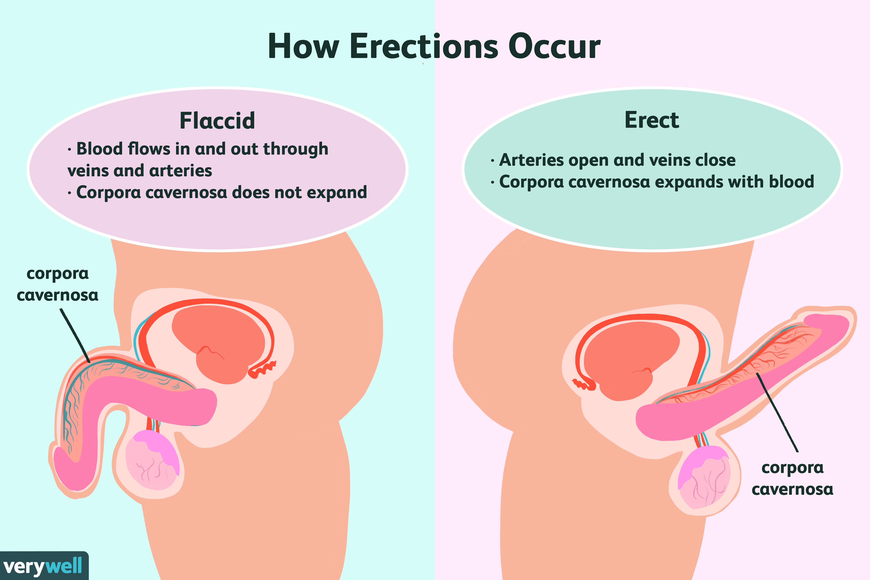 tipuri de penisuri erecți)