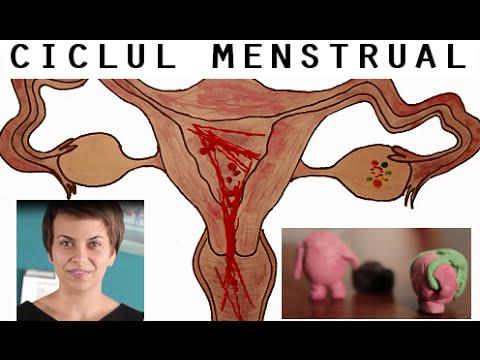 vulva și penisurile