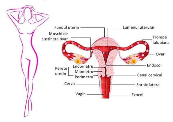 10 lucruri pe care nu le ştiai despre organul genital masculin! - CSID: Ce se întâmplă Doctore?